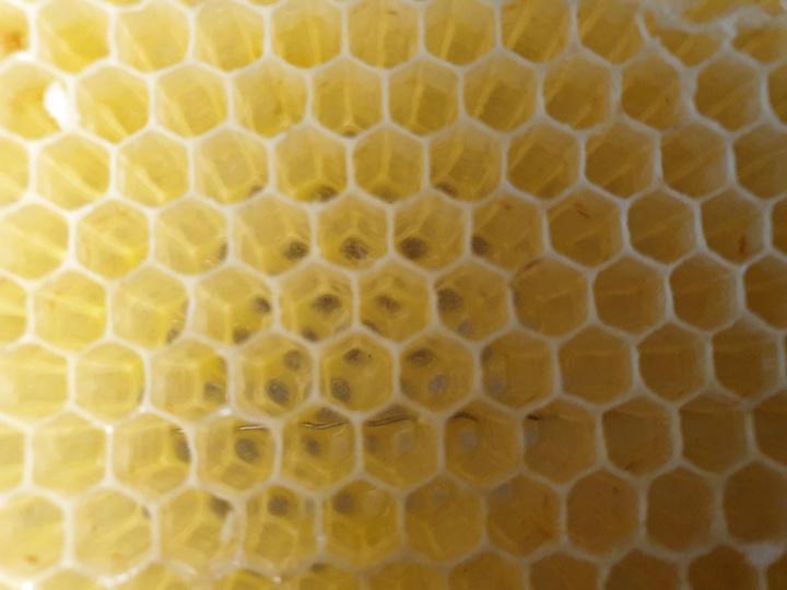BHB Bienen